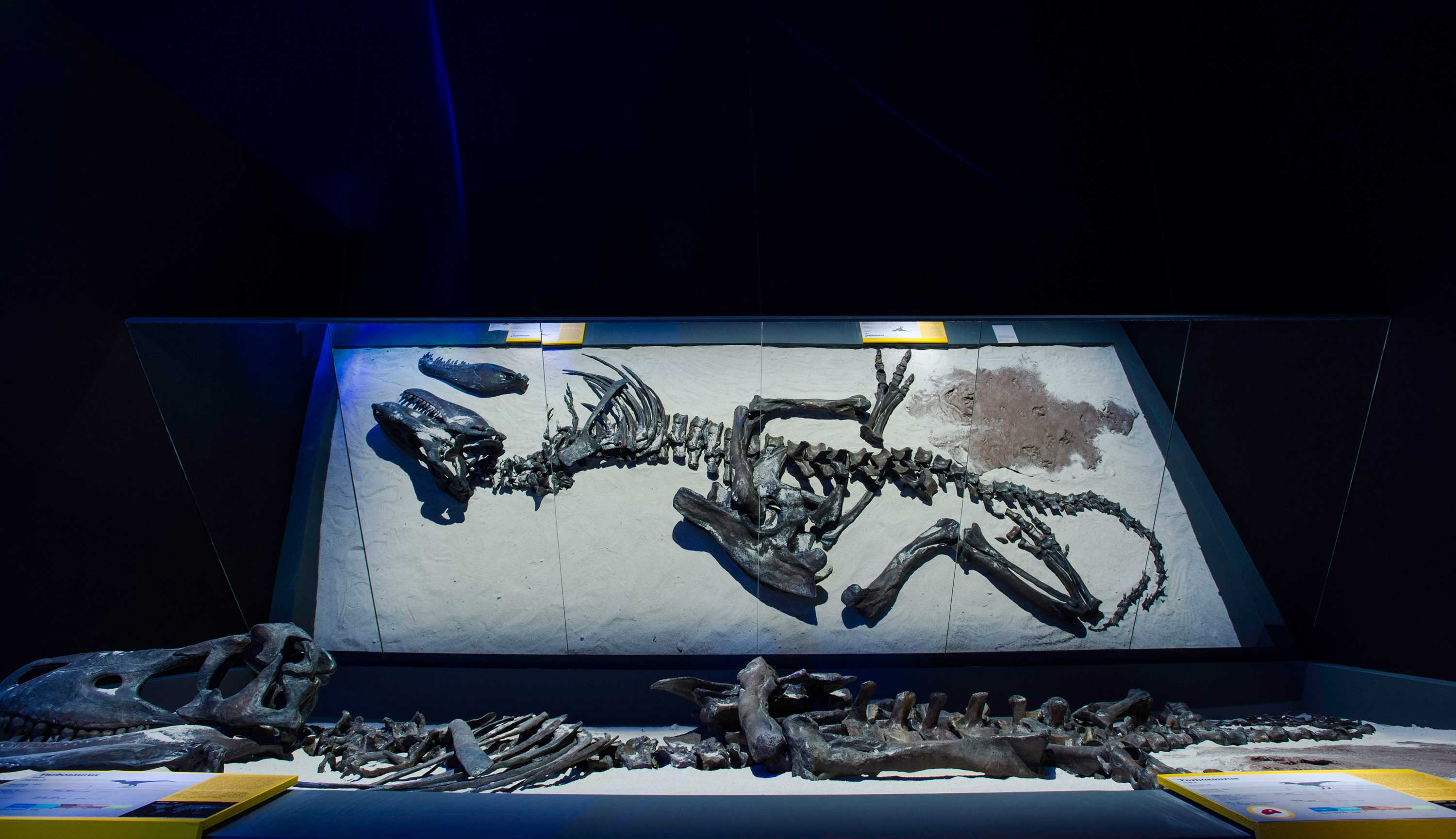 Pameran Dinosaurs Dawn to Extinction